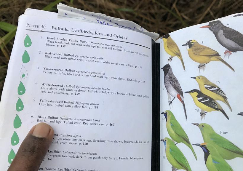 birdwatching sinharaja regenwoud