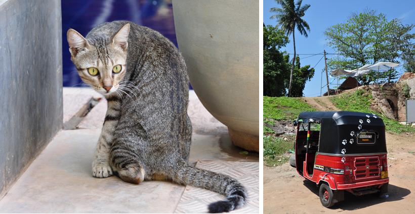 zwerfdieren Sri Lanka