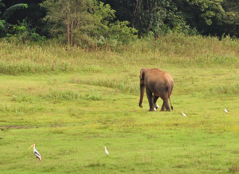 olifant in Maduru Oya bij Maha Oya