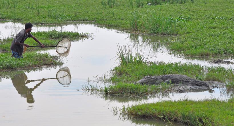 krokodil in Bundala Nationaal Park