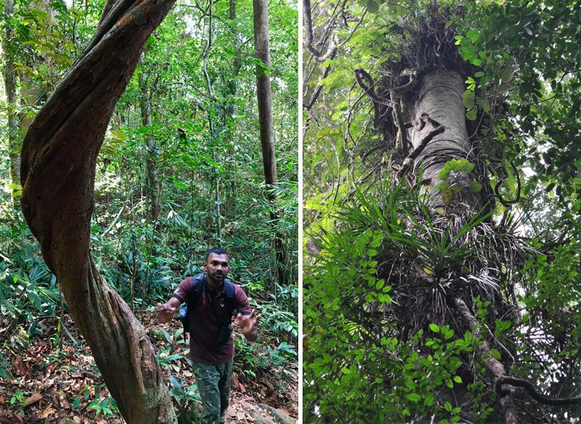 wandeling sinharaja regenwoud