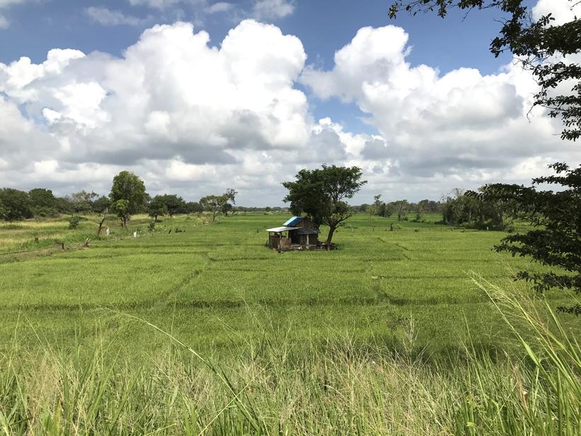 hutten in olifantenterritorium Dambulla