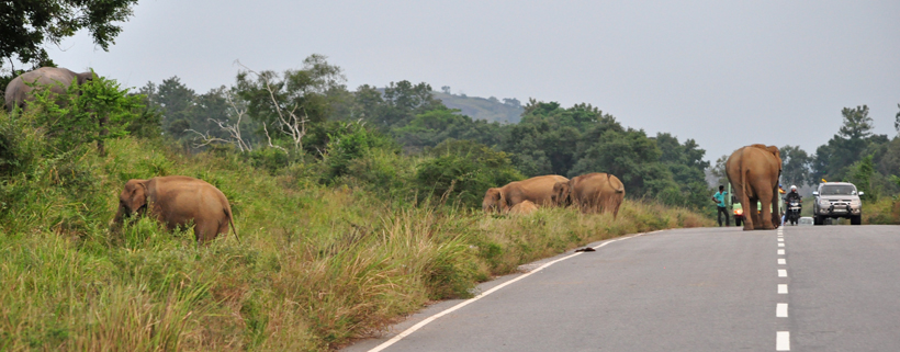 wilde olifanten maha oya