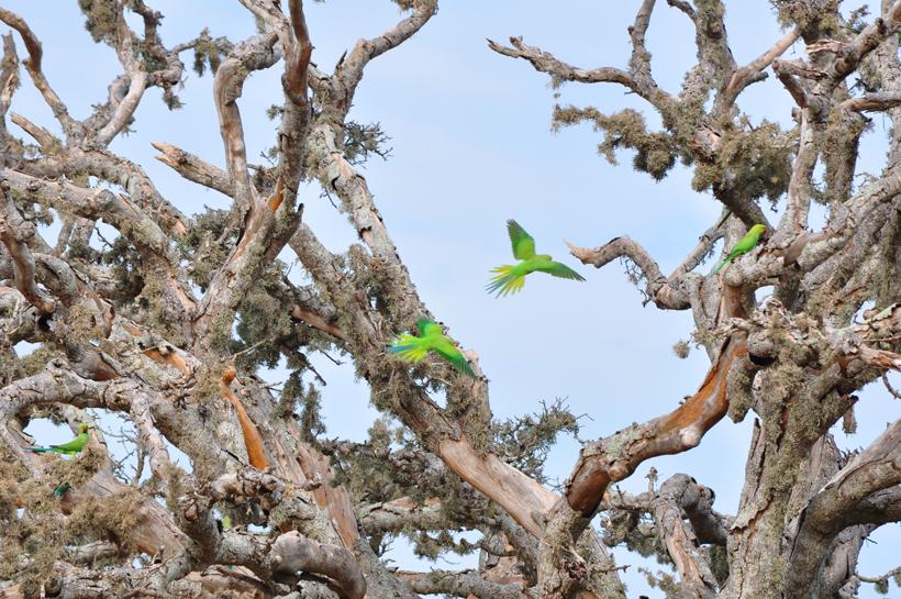 groene papegaaien in Bundala Nationaal Park