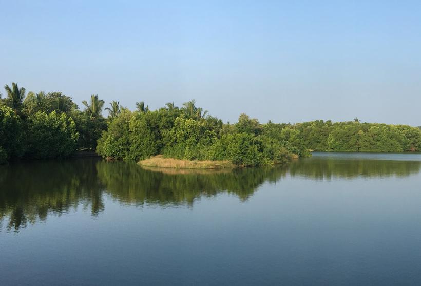mangrove tangalle natuur en rust