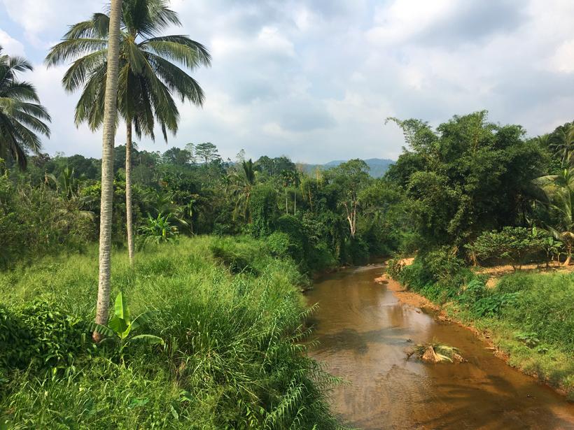 rivier Sinharaja regenwoud