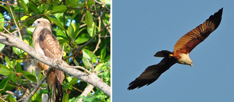 visarend Sri Lanka