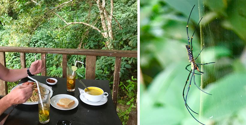 Sinharaja forest edge terras