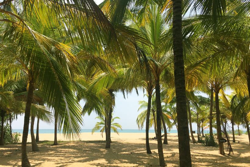 palmbomenstrand Tangalle