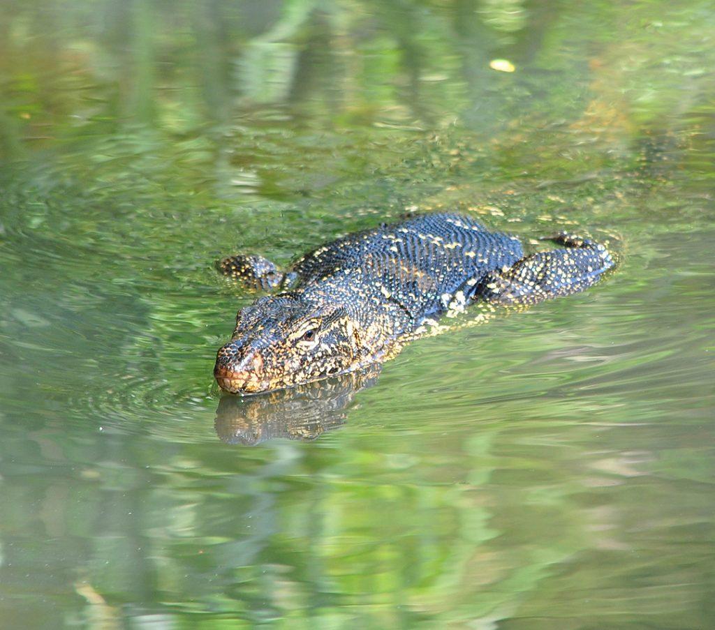 varaan Negombo kanaal