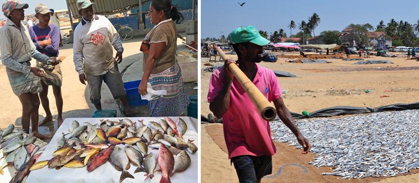 vis op strand Negombo