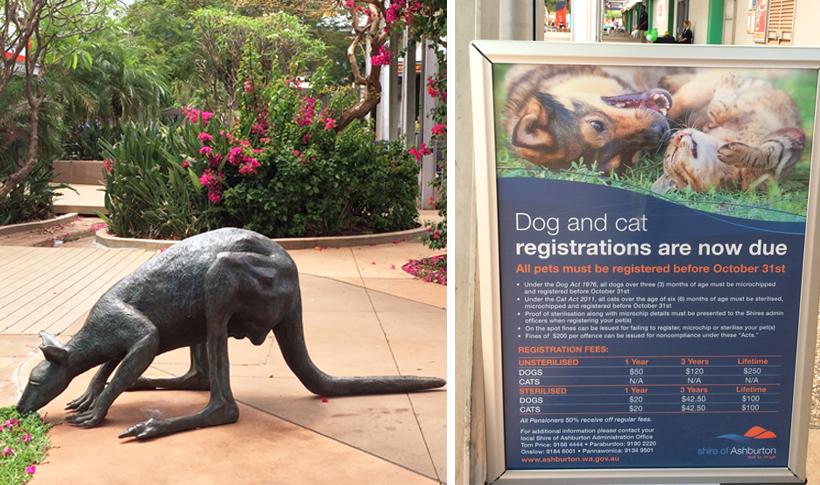 registratie huisdieren in tom price