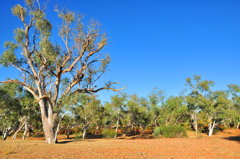 boom in droge rivier emu creek