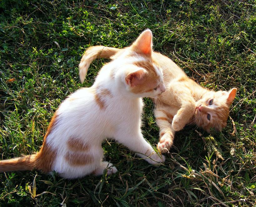 waarom duo kittens