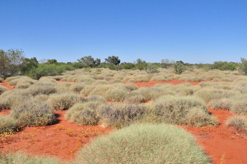 outback en bush in emu creek
