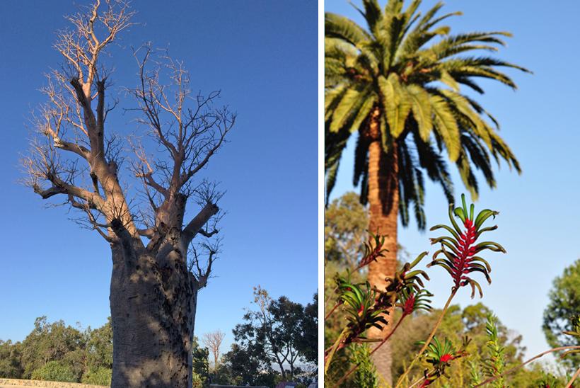 vegetatie western australia