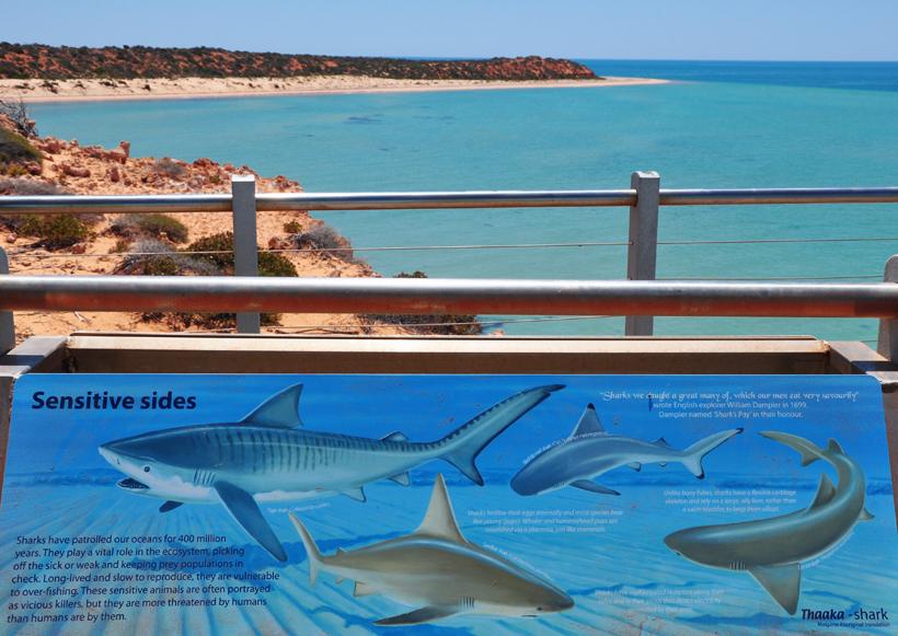 haaien in shark bay