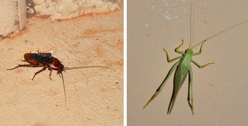 insekten western australia