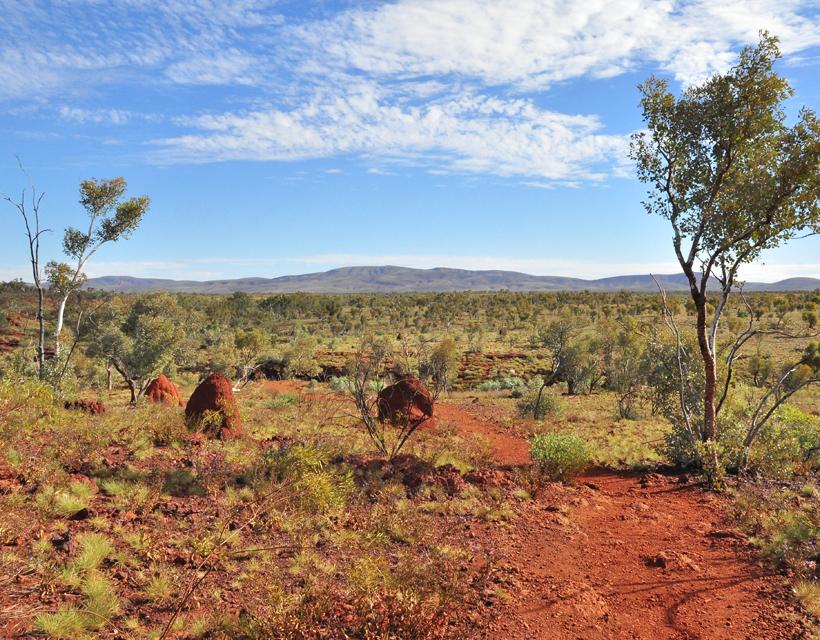 termietenheuvels in landschap Karijini Nationaal Park