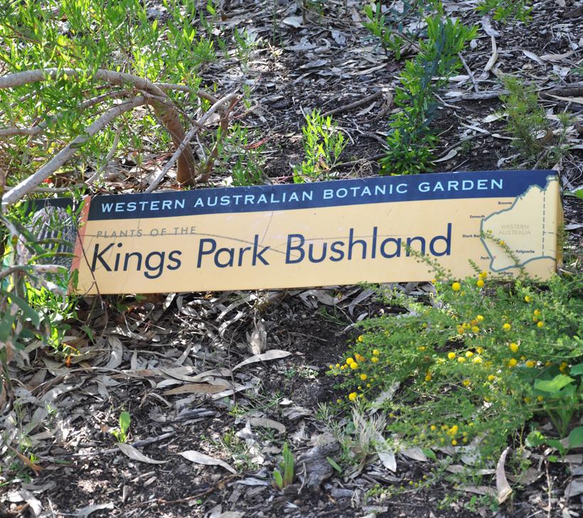 Kings Park in Perth in western australia