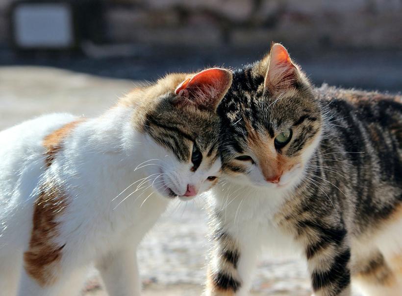 duo kittens beter