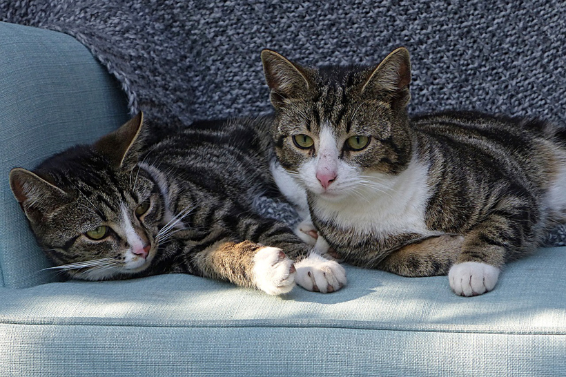 duo katten