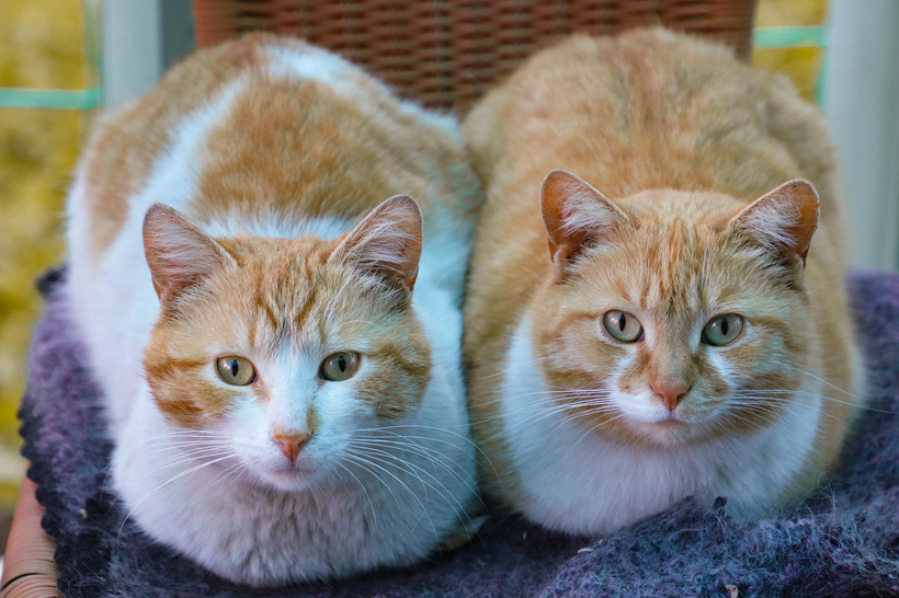 duo katten beter
