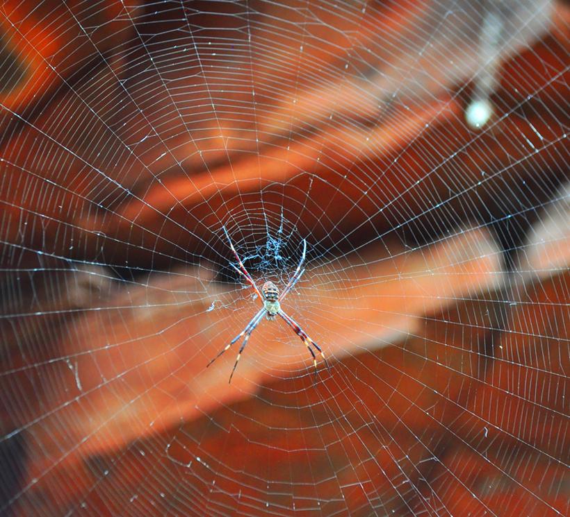 spin in web in western australia