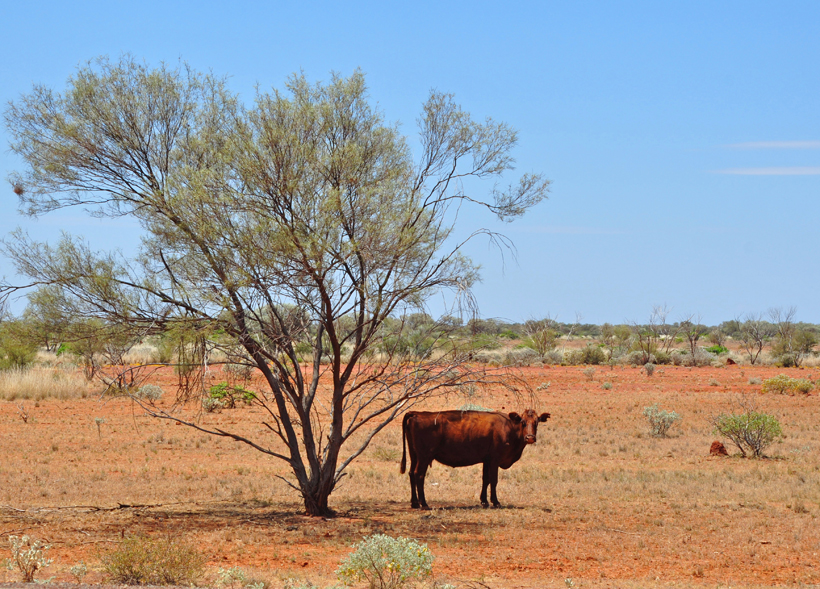 rund in rode golden outback