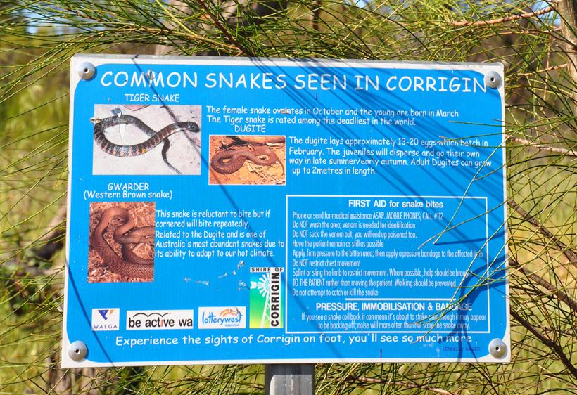slangen in western australia