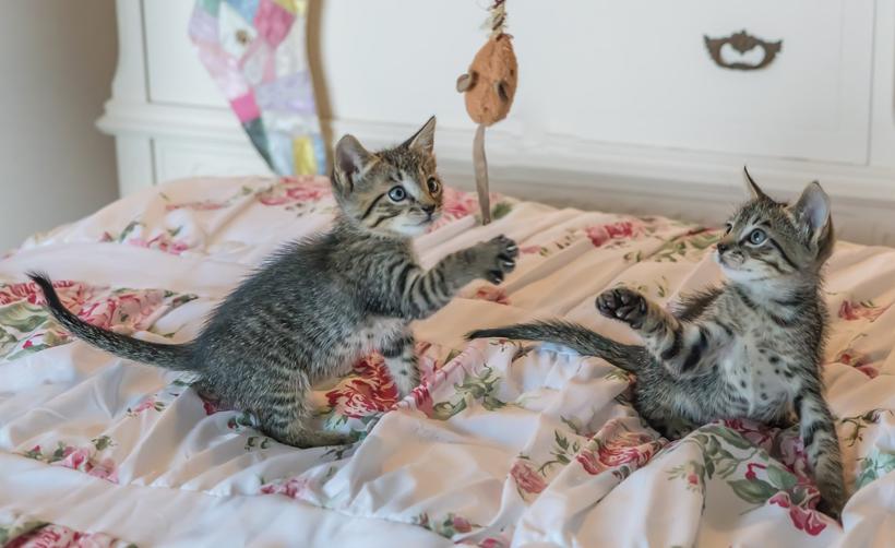 duo kittens meer plezier