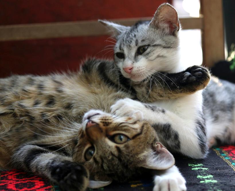 duo kittens speelt