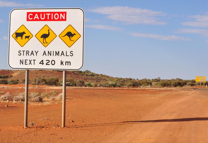 zwerfdieren in golden outback
