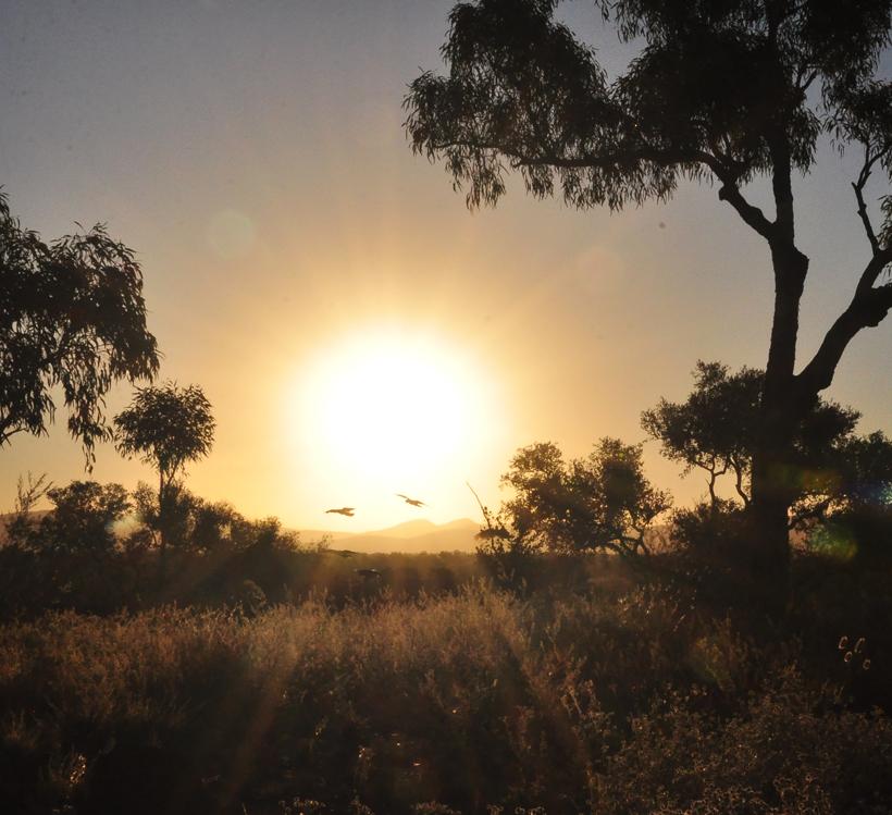 kaketoe's in zonsondergang in Karijini nationaal park