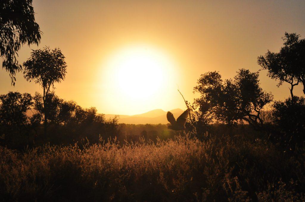 kaketoe bij zonsondergang op Dales Camping