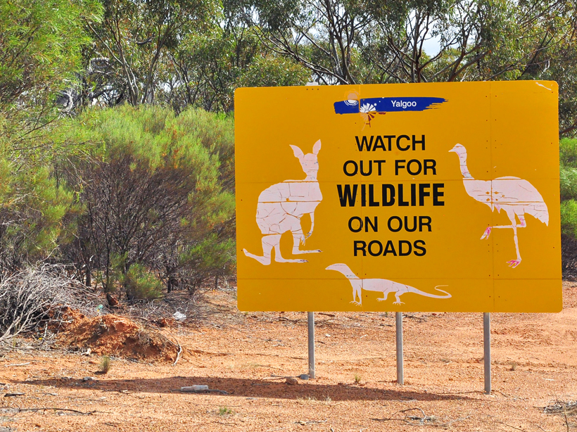 opgelet voor dieren op de weg in golden outback