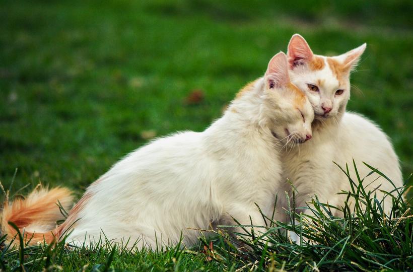 duo kittens in de tuin
