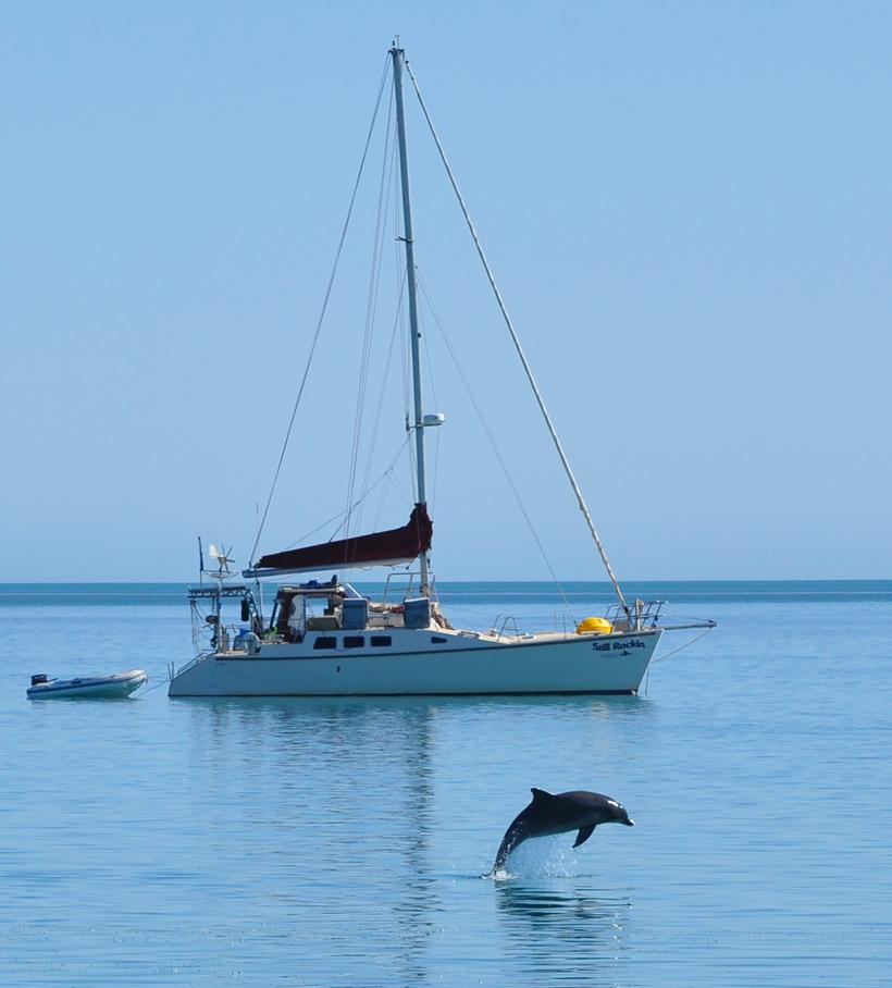 dolfijn voor boot in Monkey Mia