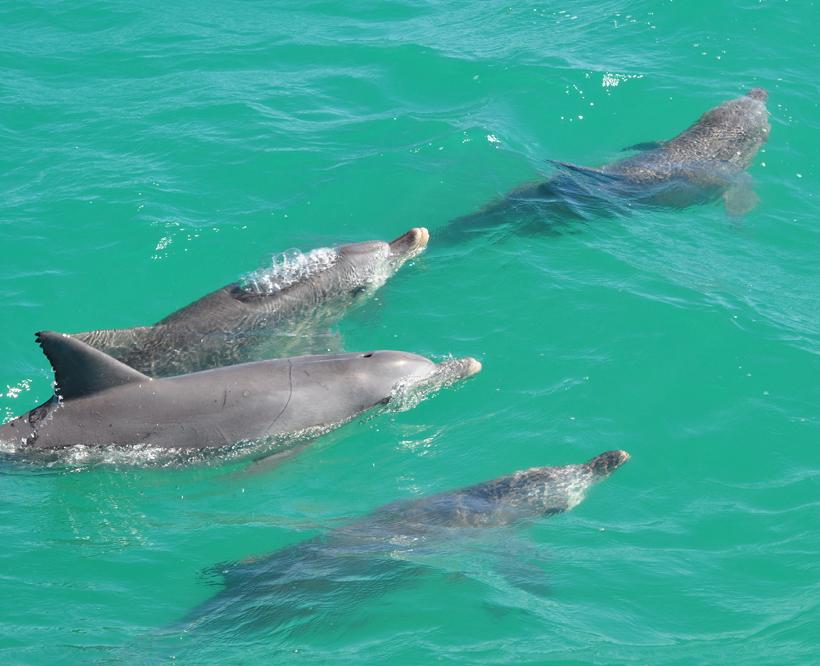dolfijn monkey mia
