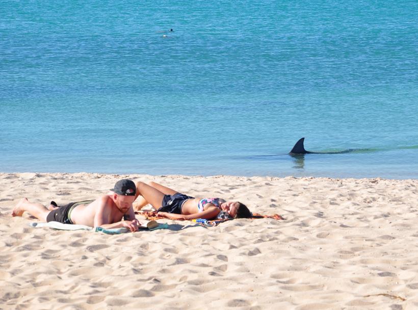 dolfijn monkey mia strand