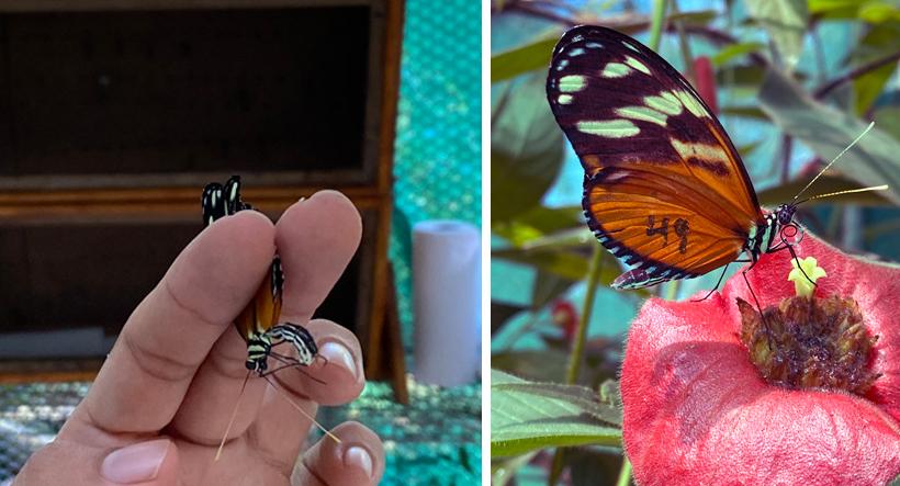 vlindertuin ojochal