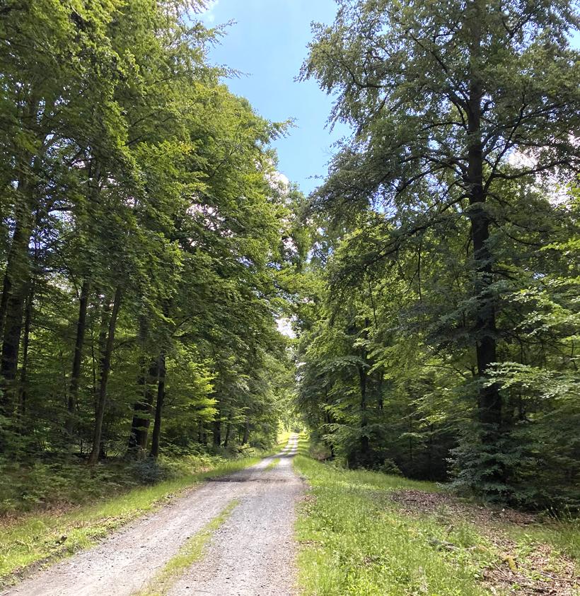 grindweg van Herbeumont naar Domaine des epioux
