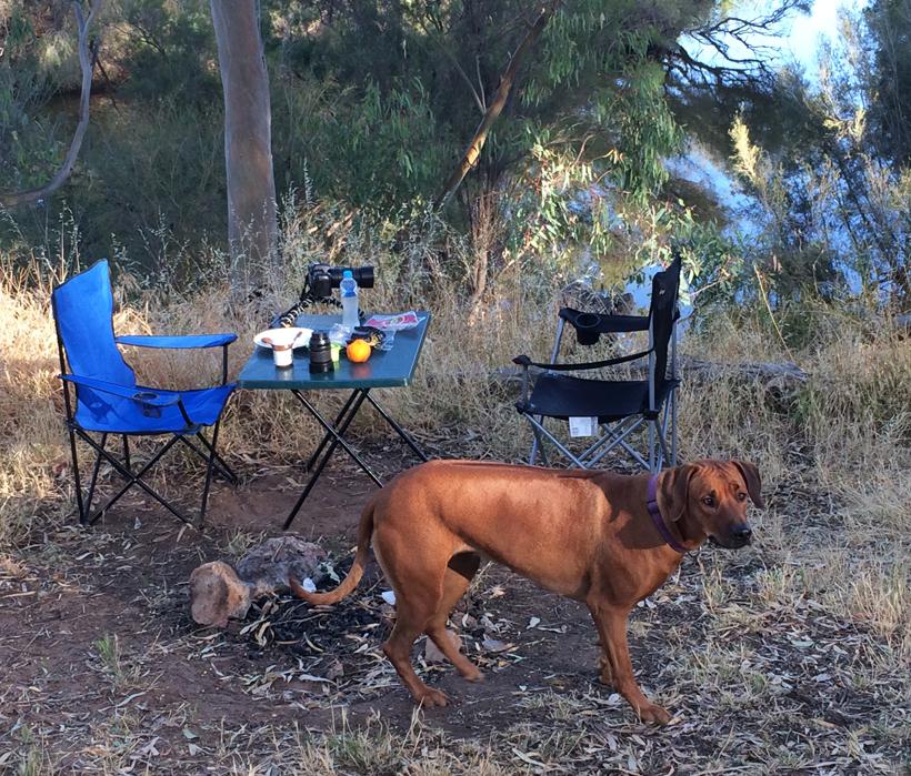 hond murchison camping
