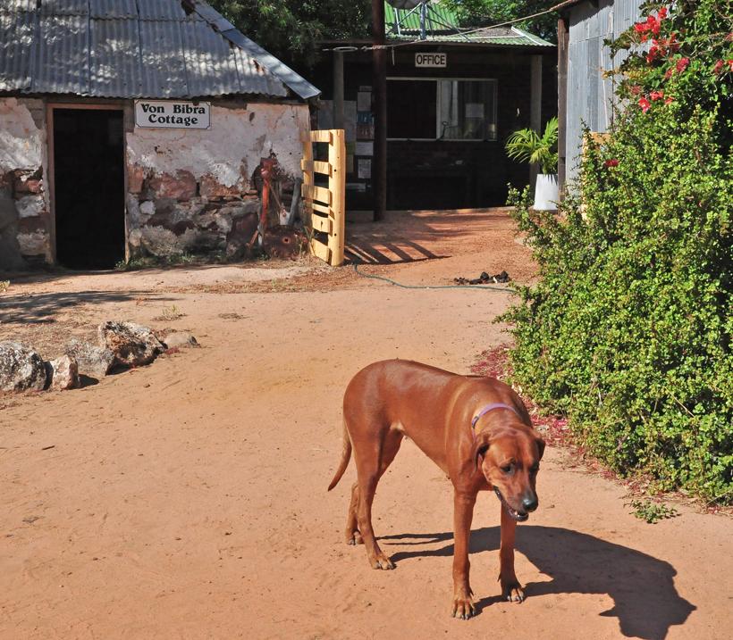 hond murchison