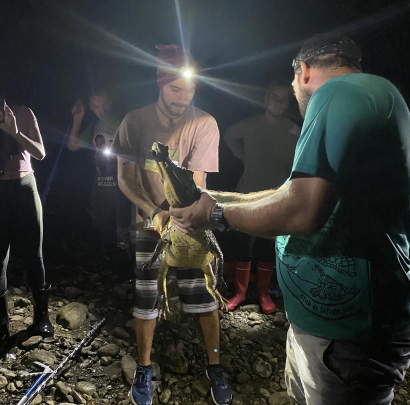 kaaimannen observeren reserva playa tortuga