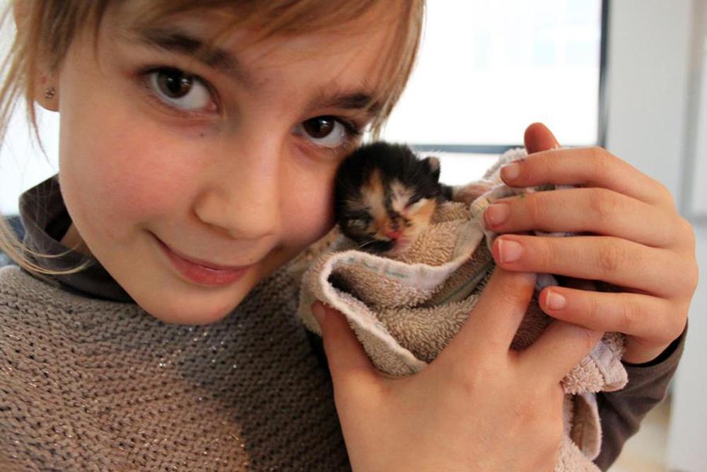 pleeggezin voor kittens kinderen helpen
