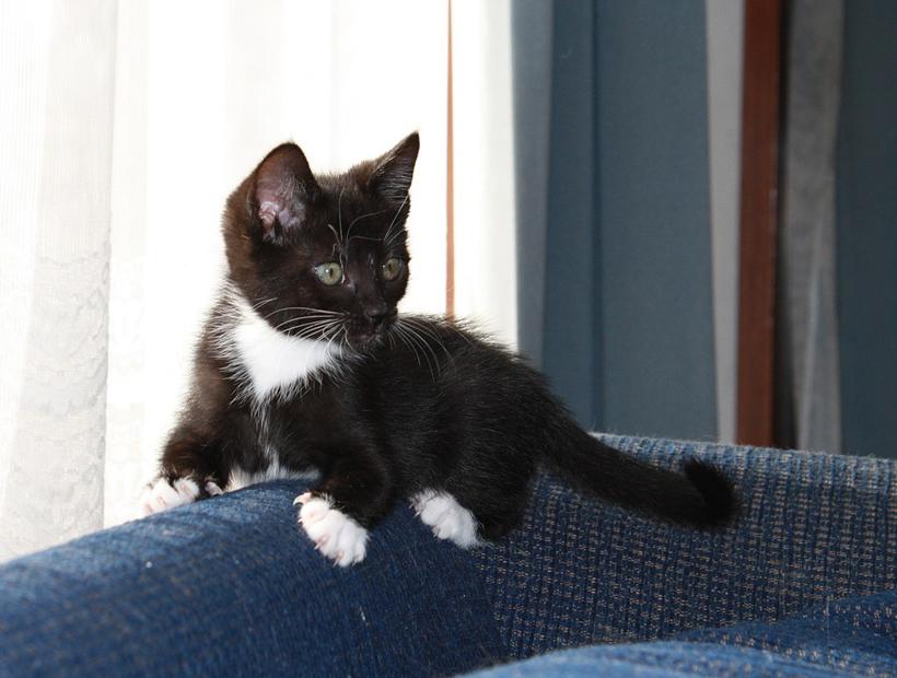 pleeggezin voor kittens