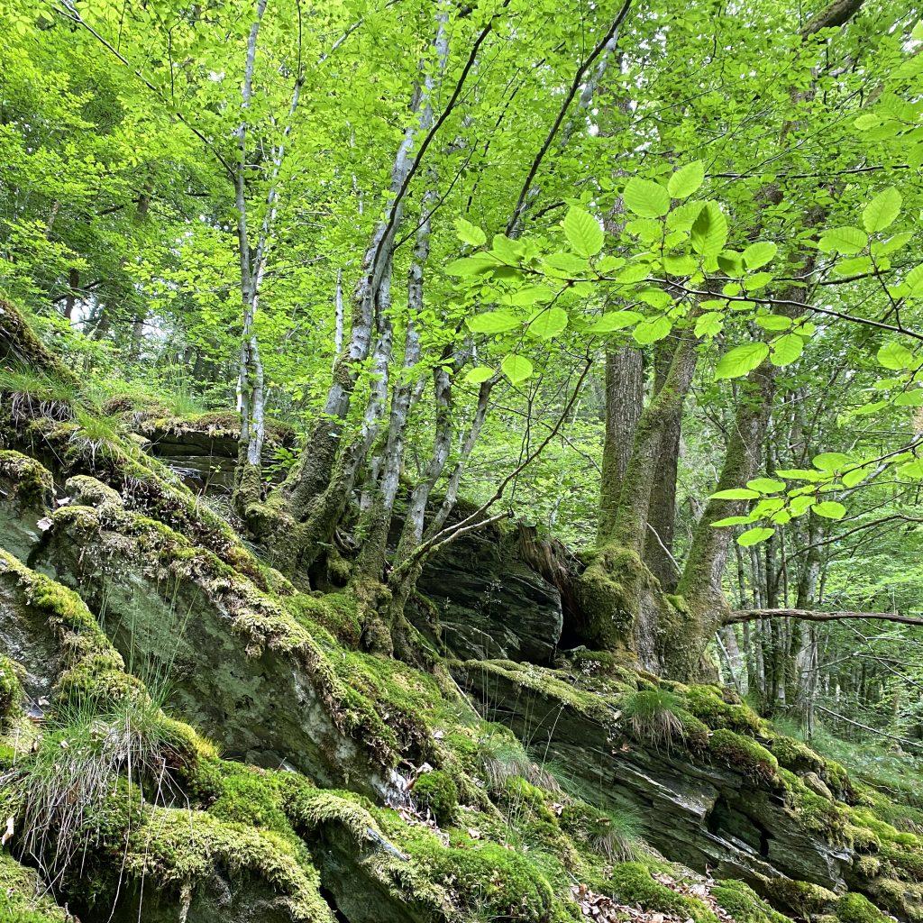 wandelen in Luxemburgse Ardennen