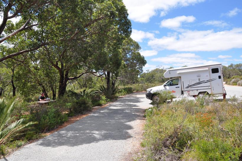 veldbloemen lesueur nationaal park westkust van Australië