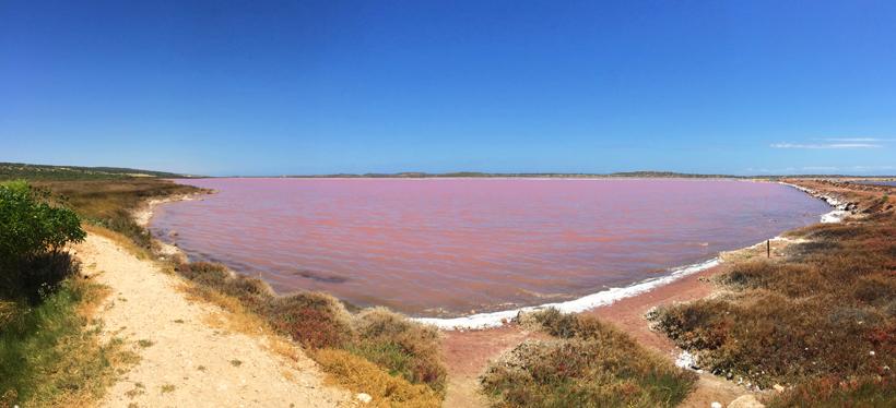 roos meer aan westkust van Australië